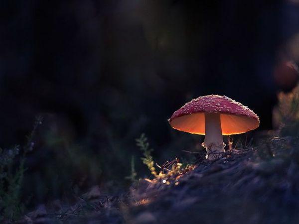 Удивительные фотографии   Ярмарка Мастеров - ручная работа, handmade