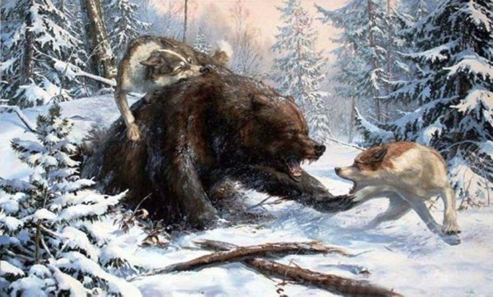 медведи на картинах