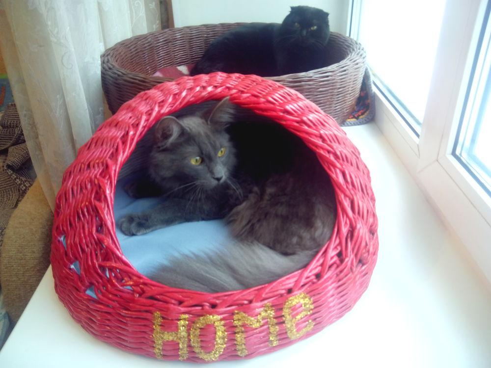 кошки, все для животных