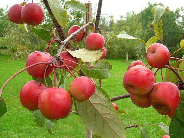 Осень- пора яблок! | Ярмарка Мастеров - ручная работа, handmade