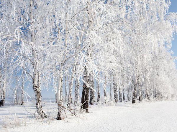 Первый день зимы! | Ярмарка Мастеров - ручная работа, handmade