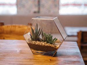 Какие растения сажают во флорариумы. Ярмарка Мастеров - ручная работа, handmade.