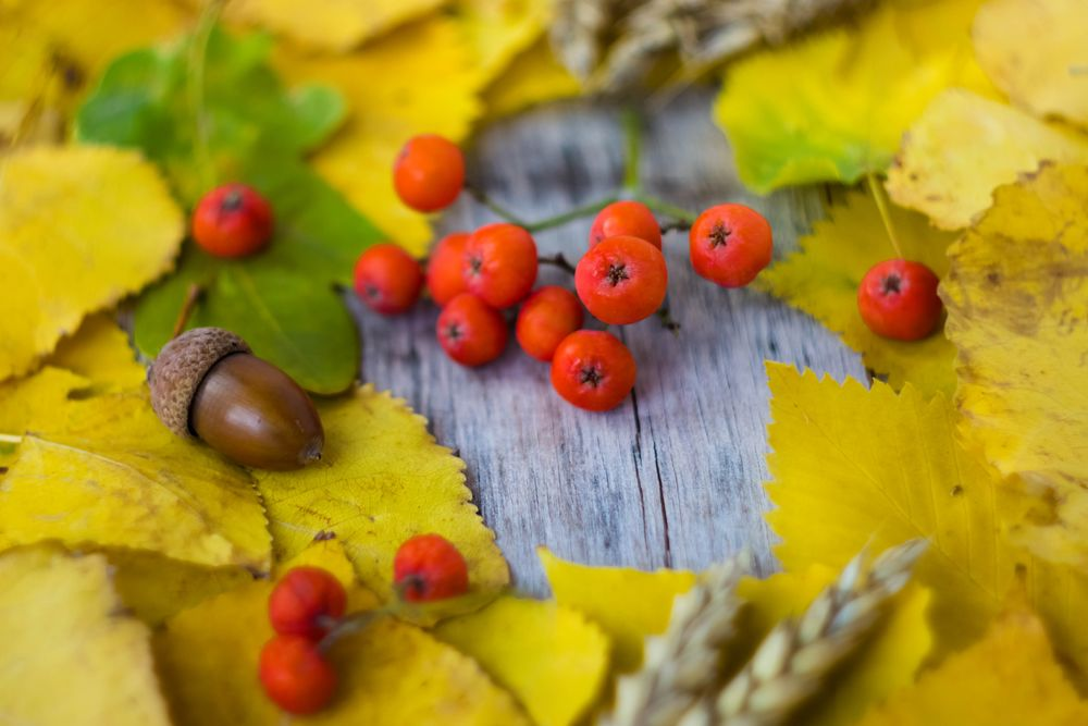 осень, новая коллекция, вдохновение, броши, анонс, анонс новинок, листья, новый товар, новый сезон, сентябрь