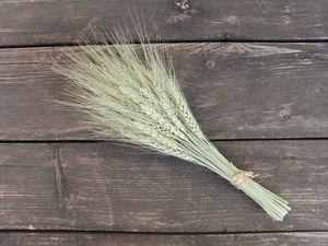 Новинка! Выгодно! Пшеница в букетах. 50 колосьев. Ярмарка Мастеров - ручная работа, handmade.