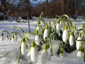 С Первым Днем Весны!!!!   Ярмарка Мастеров - ручная работа, handmade