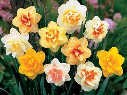 Что говорят цветы.....!!!!, фото № 6