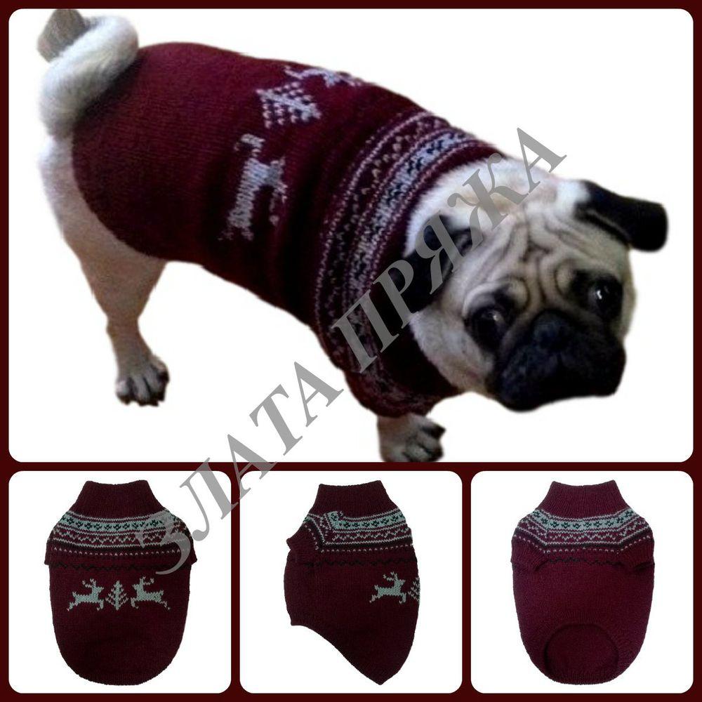 свитер мопсу, свитер для собаки, одежда для собак, одежда для животных, злата пряжа, свитер для мопса