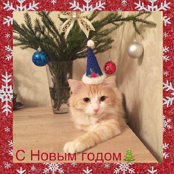 коты, елка