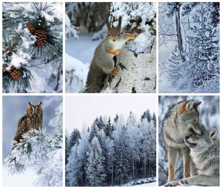 зима, декабрь, лес, природа, красивые фото, красивые фотографии, для души, сова, волк, белка, скоро новый год