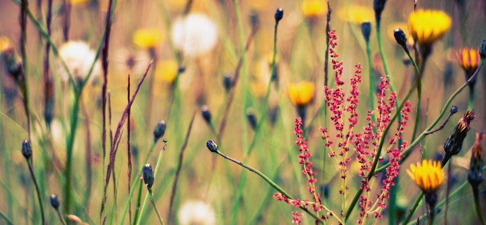 тинктура, настойки, растения, травы, тинктурирование, настаивание, настойка