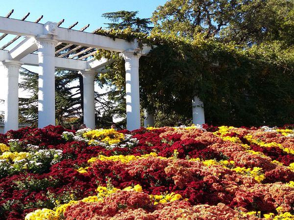 Парад хризантем в Никитском ботаническом саду.   Ярмарка Мастеров - ручная работа, handmade