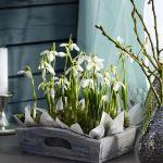 spring-flowers-new-ideas-snowdrops-and-crocus5.jpg
