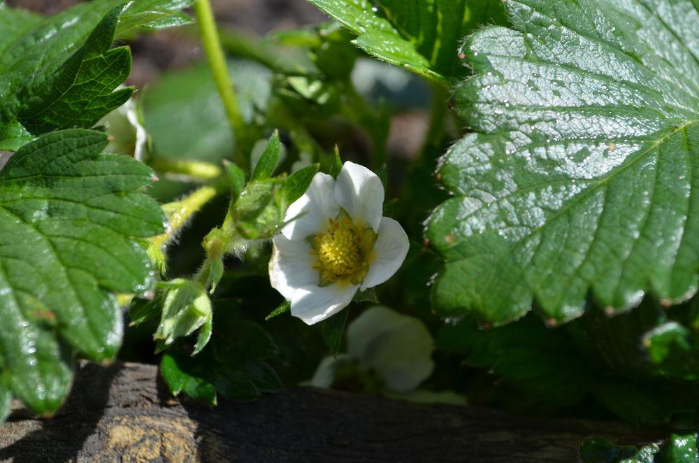 Наконец весна!, фото № 3