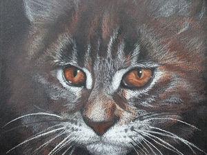 Рисуем пастелью портрет котёнка на тёмной бумаге. Ярмарка Мастеров - ручная работа, handmade.
