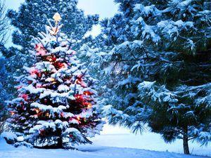 Набор мастеров. Рождественская ярмарка- распродажа. | Ярмарка Мастеров - ручная работа, handmade