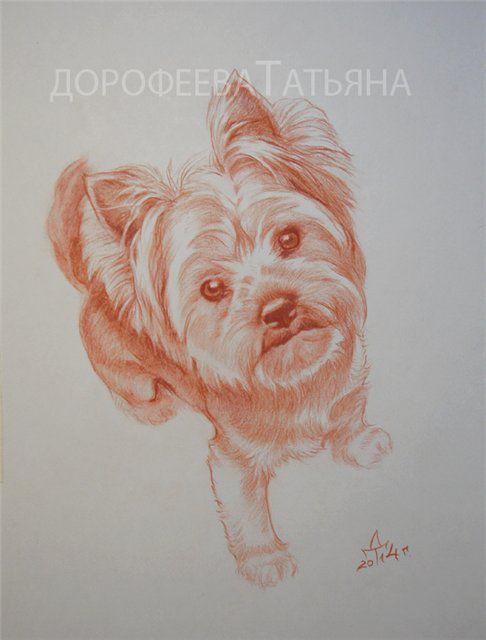 конфетка, портрет собаки, портрет карандашом, портрет в сангине