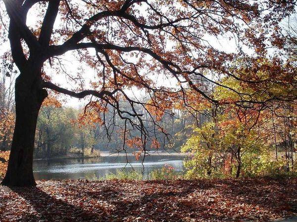 Осень... такая ли она унылая пора? | Ярмарка Мастеров - ручная работа, handmade