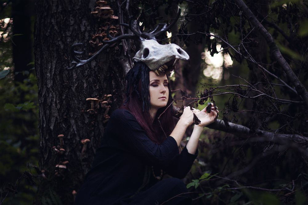 рога оленя, хозяин леса