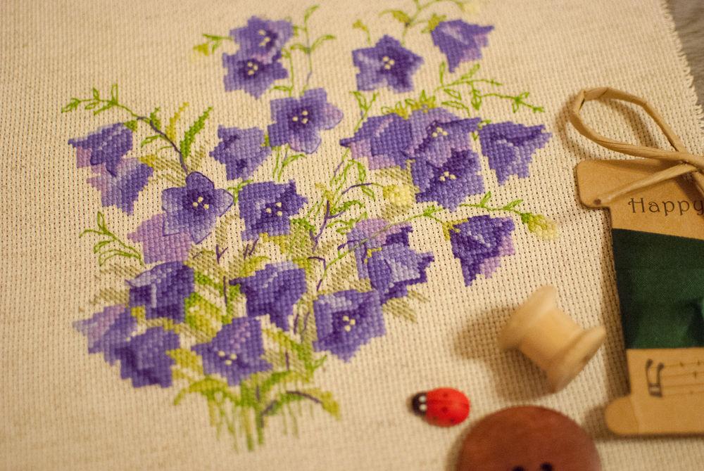 колокольчики, полевые цветы