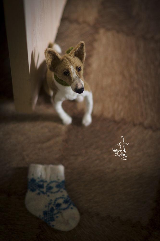 Моня собак, фото № 17