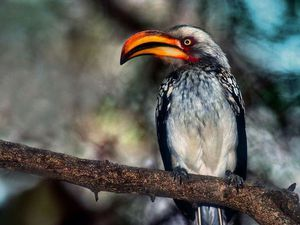 Новая птица-брошь. | Ярмарка Мастеров - ручная работа, handmade