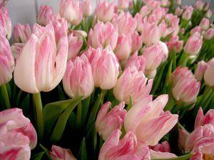 Весенние тюльпаны ждут Вас... | Ярмарка Мастеров - ручная работа, handmade