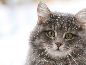 Новые теплые носочки к новому осенне-зимнему сезону! Кому потеплее?!. Ярмарка Мастеров - ручная работа, handmade.