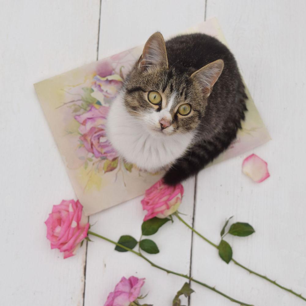 творчество, кошка
