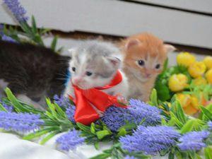 Малыши ищут дом! Марусины котята подрастают! | Ярмарка Мастеров - ручная работа, handmade