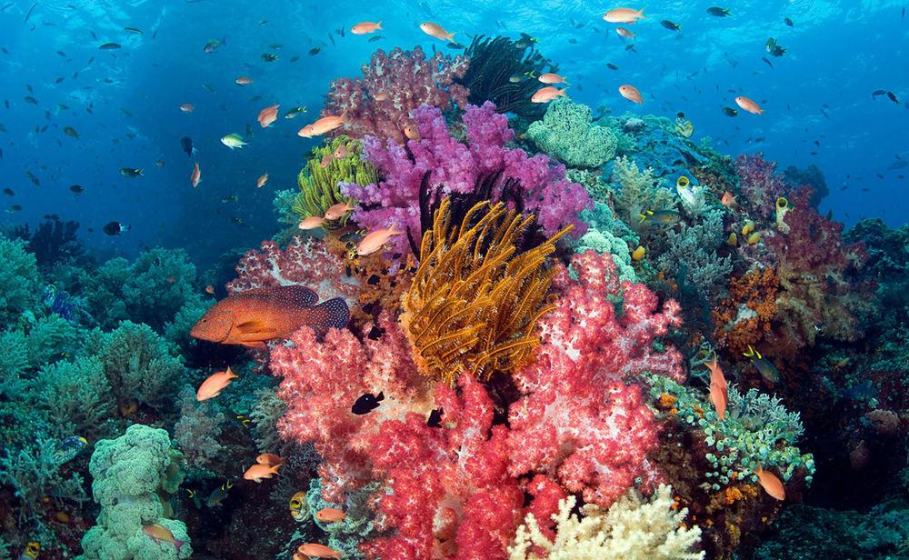 Краски природы: 49 впечатляющих фотографий, фото № 45
