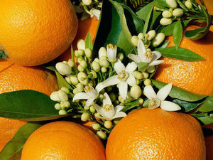 Весна! Фестиваль цветения апельсинов. Ярмарка Мастеров - ручная работа, handmade.
