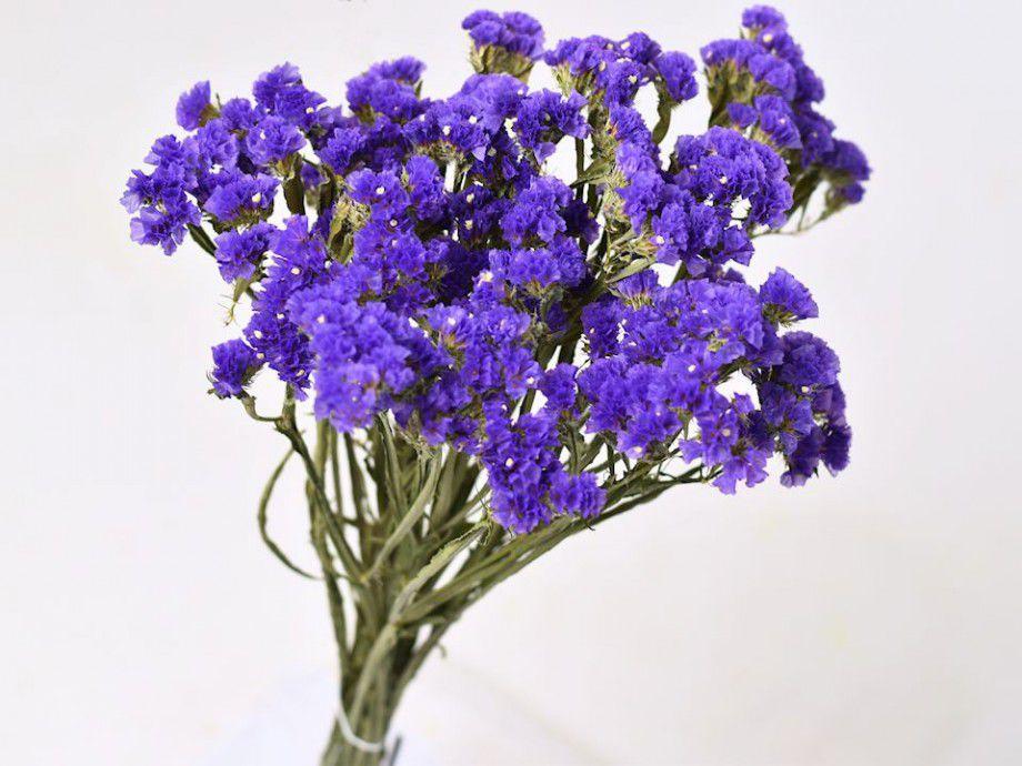 Цветы описание статица