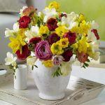 spring-flowers-new-ideas-narcissus10.jpg