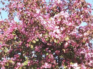 Весна! У нашего дома снова цветет сакура!. Ярмарка Мастеров - ручная работа, handmade.