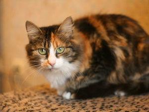 Кошка, нейминг и заварка.. Ярмарка Мастеров - ручная работа, handmade.