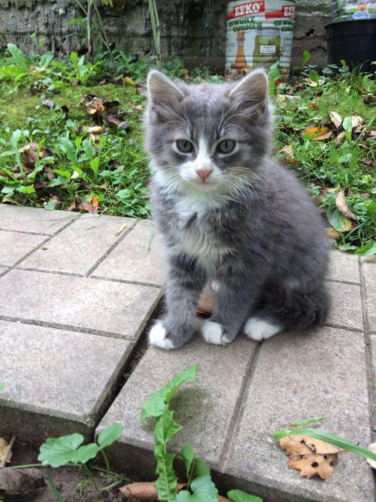 помощь животным, кошка ищет дом