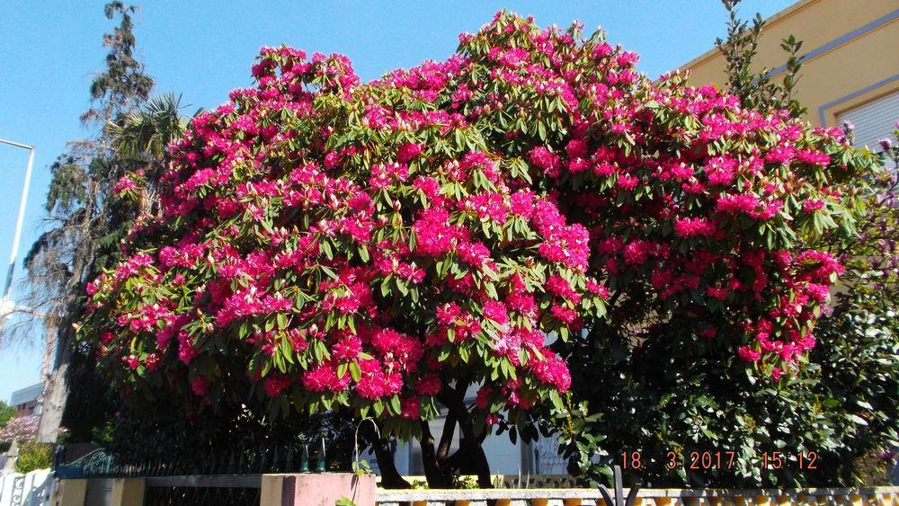 цветы, выходные