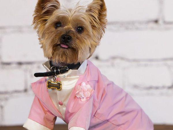 Особенности одежды для маленьких собак   Ярмарка Мастеров - ручная работа, handmade