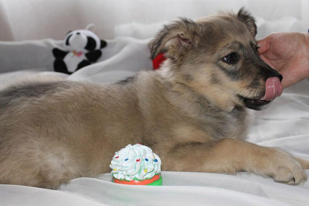собака, собака ищет дом, щенок, щенки, щедрость, благотворительность, помощь, помощь животным, помощь собаке, помощь мастеру, помощь кошке, друг, одиночество