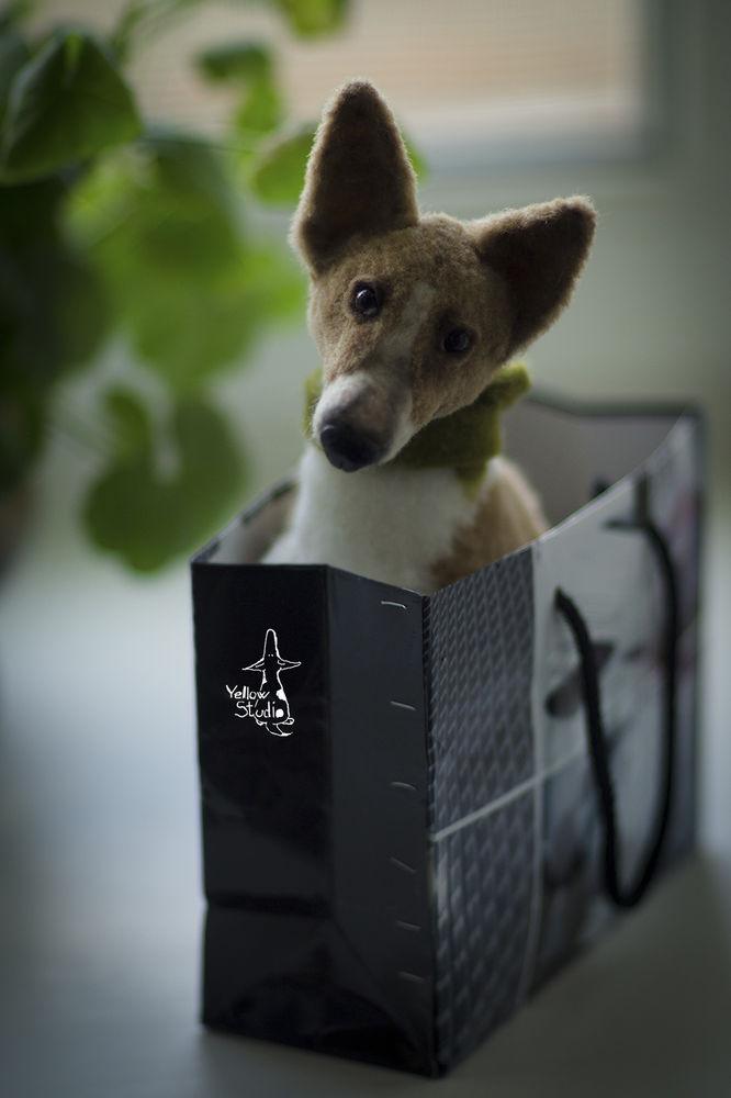 Моня собак, фото № 4