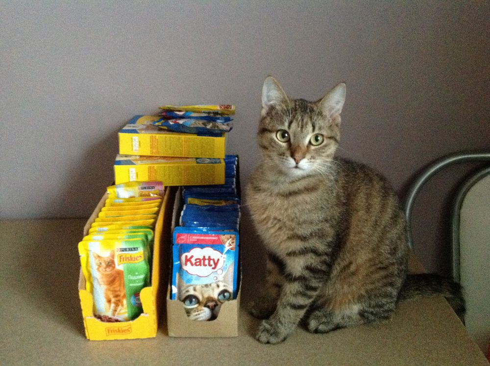 помощь котам, кот кошка