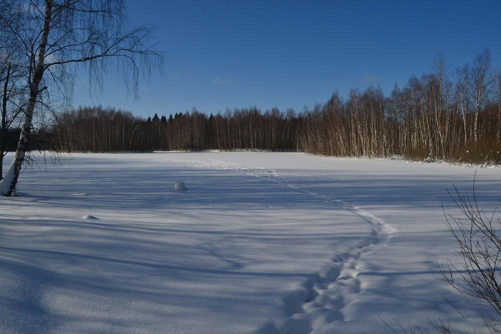 фотографии, зимнее солнце