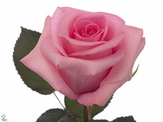 8 марта, подарок на 8 марта, призы украшения