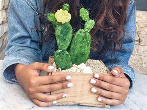 Флористическая композиция с кактусом из полимерной глины. Ярмарка Мастеров - ручная работа, handmade.