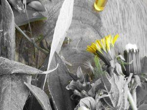 Натуральные духи с ароматом мёда и разнотравья на медовый спас!. Ярмарка Мастеров - ручная работа, handmade.