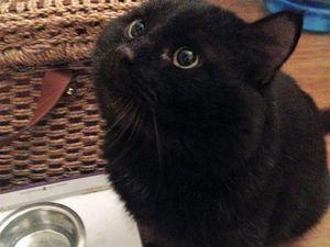 Особенный кот Гудрон в поисках Дома! | Ярмарка Мастеров - ручная работа, handmade