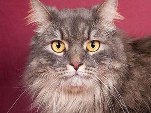 Каждой кошке нужен Дом!   Ярмарка Мастеров - ручная работа, handmade