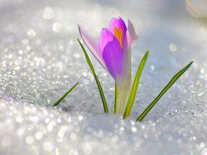 Конкурс Коллекций Весна Идет,весне Дорогу!!!!!