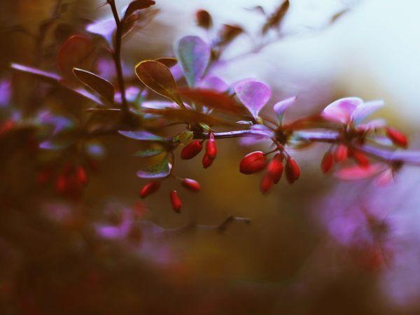 Волшебный мир природы в фотографиях Кристины Манченко | Ярмарка Мастеров - ручная работа, handmade