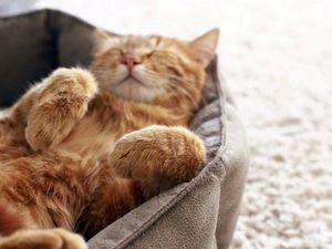 Мой кот не будет есть фигню?. Ярмарка Мастеров - ручная работа, handmade.